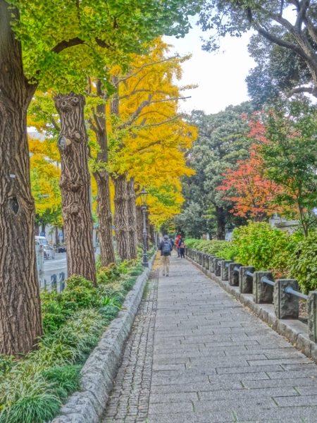横浜山下公園 紅葉