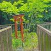 初夏の寺家ふるさと村の水田地帯とパワースポット(2016年6月)