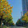横浜山下公園・並木通りの紅葉