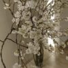 六本木ヒルズレジデンスのロビー観葉桜