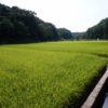 秋の寺家ふるさと村~稲穂が育つ時期、熊野神社から田園を望む