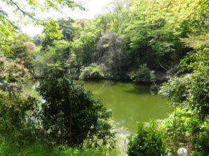 高岡古城公園 水場