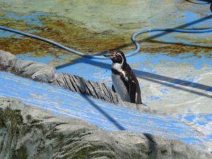 高岡古城公園 ペンギン
